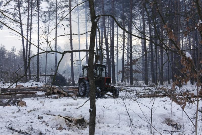 В Деснянском районе неизвестные уничтожили лес