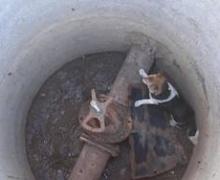 В канализацию провалилась бездомная собака-фанат этого дела