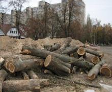Столичная власть намерена оставить Беличанский лес в покое