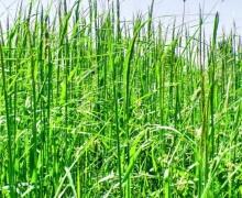 За высокую траву будут штрафовать