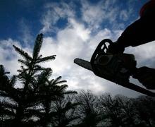 У Гостомеля уничтожают киевский лес