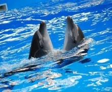 """Киевских дельфинов """"Немо"""" выпустят на волю?"""