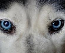 В Киеве кто-то продолжает убивать собак