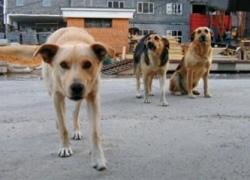 """Из """"Центра защиты животных"""" каждый сможет взять себе зверюшку"""