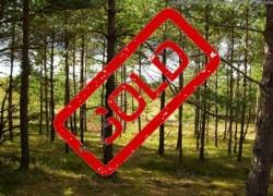 У Святошинского лесопаркового хозяйства отобрали около 160 га