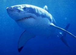 В столичном зоопарке могут поселиться акулы