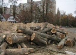 Кто уничтожает Беличанский лес?