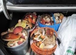 Киевлян хотели накормить Чернобыльскими грибами