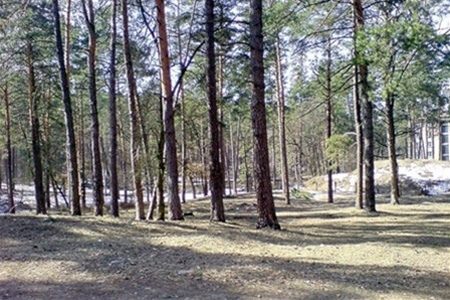 Судьба Беличанского леса находится в руках Президента Украины