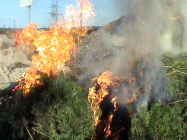 Под Киевом сгорела конопля стоимостью 2,5 млн. гривен