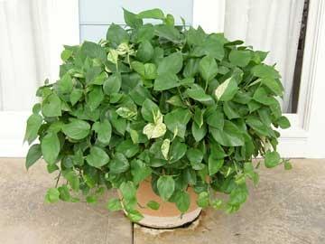 Благоустройство на подоконнике - комнатные растения