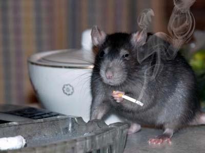 На Оболони будут травить тараканов и крыс