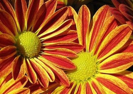 Осенние цветы способствуют гармонии разума и эмоций