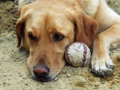 Власти заставят собак прекратить размножаться
