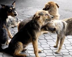 Новорожденные щенки в Киеве погибают мучительной смертью