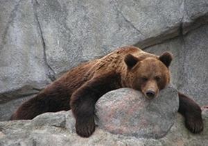 В Киевском зоопарке медведи отправились на зимний ночлег