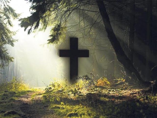 Хоронить умерших будут в киевском лесу?