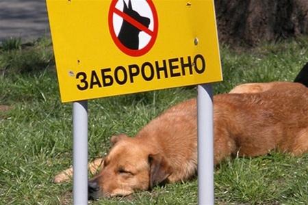 Владельцев собак заставят убирать за питомцами