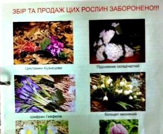 В метро Киева появилась реклама о запрете купли-продажи первоцветов