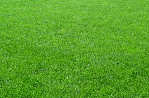 Что необходимо для поддержания газона в идеальном состоянии?