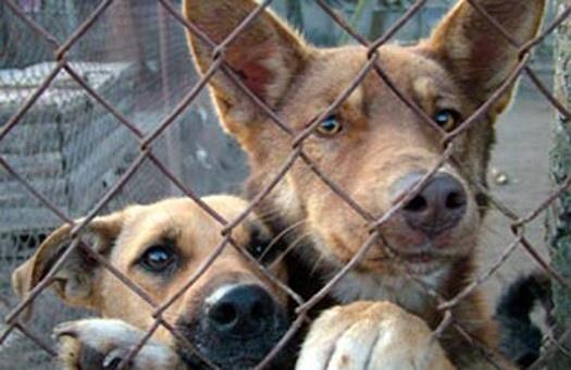 В Киеве убивают собак. Число жертв - 33