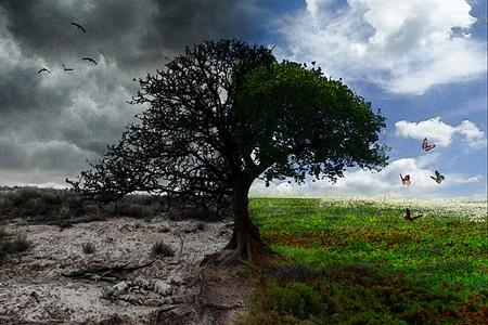 В Киеве проведут перепись деревьев и кустов