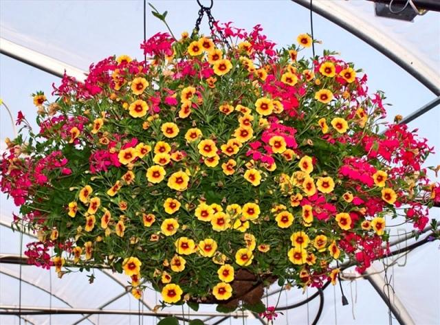 Киев украсят ампельными растениями