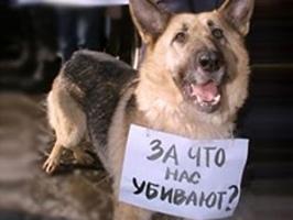 На Майдане зоозащитники выступят против догхантеров