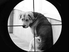 Догхантеры убивают собак лекарством для лечения туберкулеза