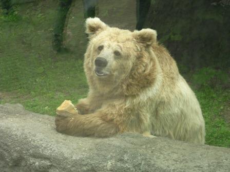"""Киевлянам позволят """"усыновить"""" зверей из зоопарка"""