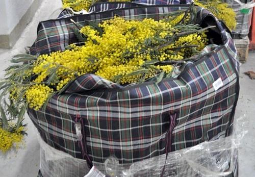Таможенники изъяли у грузина 74 кг живых цветов