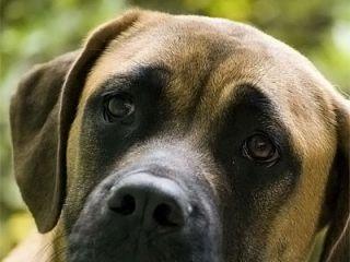 В Киеве некто расстрелял шесть щенков
