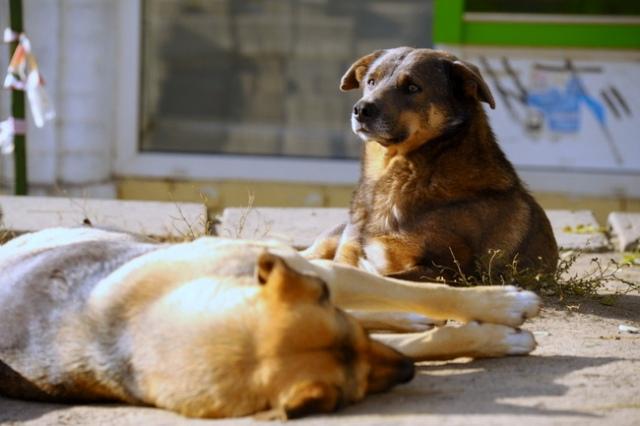 Попов призвал не убивать бездомных собак