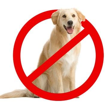 Депутаты намерены усовершенствовать механизм защиты животных