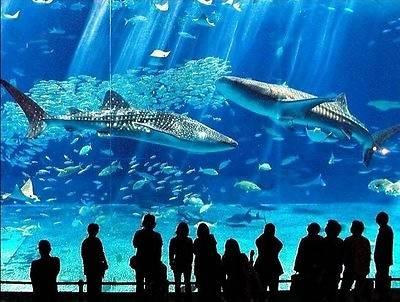 В киевском зоопарке акул и мурен не будет