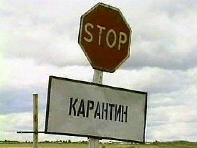 В Деснянском районе Киева нельзя гулять с собаками