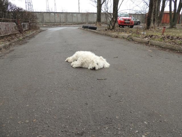 Киевлянин убил собаку на глазах у 13-летних подростков