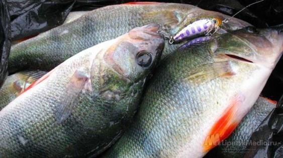 Милиция не разрешает киевлянам ходить на рыбалку