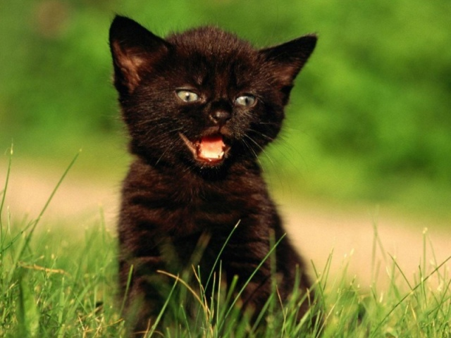 Новорожденный котенок провалился в шахту на территории детсада