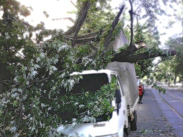 На Подоле упавшее дерево подмяло грузовик