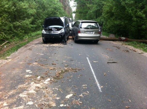 Упавшая сосна стала причиной ДТП для двух авто под Киевом