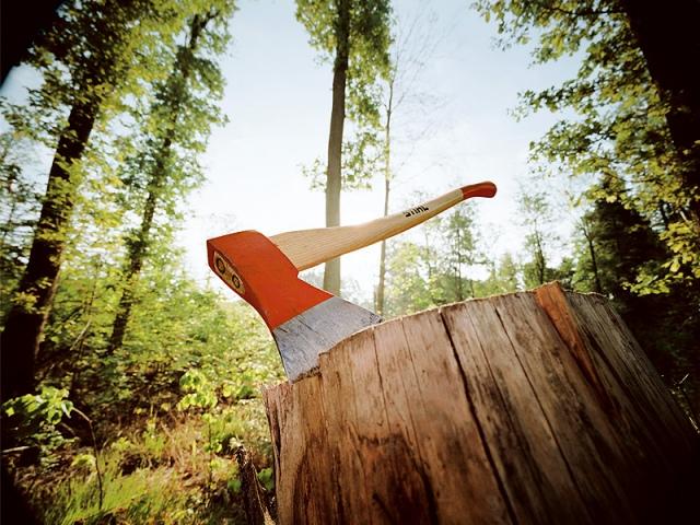 На Оболони неизвестные лица решили искромсать лес со 100-летними соснами