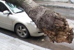 """Шквал ветра обвалил дерево на """"Мерседес"""""""
