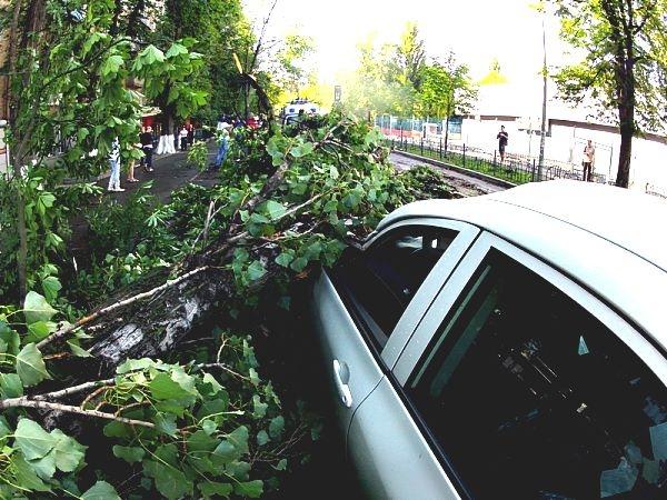 Жертвами упавшего дерева в Киеве стали две иномарки