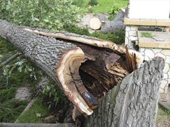 """Какими способами проводится """"демонтаж"""" деревьев?"""