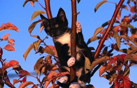 Мальчик застрял на дереве, спасая котенка