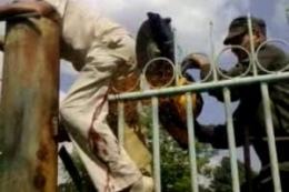 Мужчина, перелезая через забор, напоролся на металлический прут