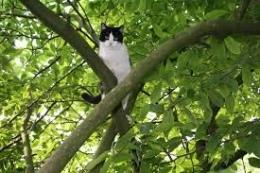Кот скрывался от хозяйки на дереве целых три дня
