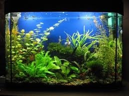 Рыбки закоротили провода в аквариуме и случился пожар в квартире