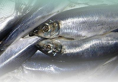 На прилавки столичных рынков готовились привезти тухлую рыбу